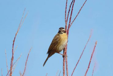 پرنده کمیاب در ابقد