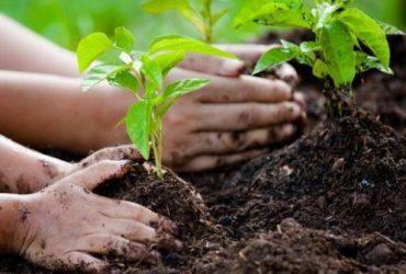 توزیع نهال رایگان به مناسبت روز درختکاری در شهر گلبهار