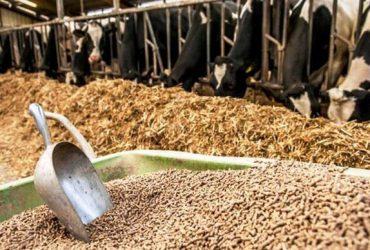 توزیع جو ویژه خشکسالی دام سبک در شهرستانهای چناران و گلبهار