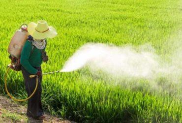 سمپاشی 7650 هکتار از اراضی شهرستان چناران و گلبهارعلیه شته مزارع غلات